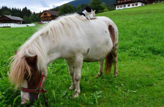 lutzerhof-taisten-welsberg-suedtirol (11)